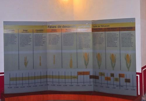 Museo del Valle de Tehuacán (01)
