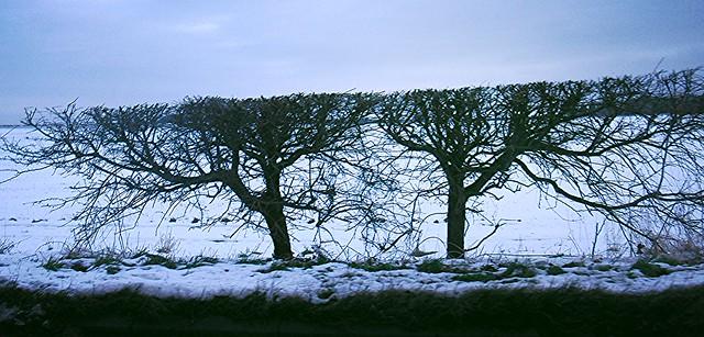 Rococo hedgerow