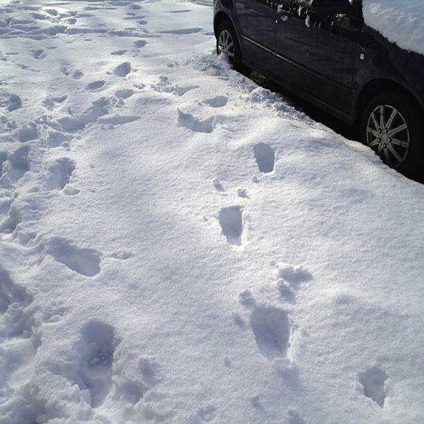 My #footprints, I love being the first #snow