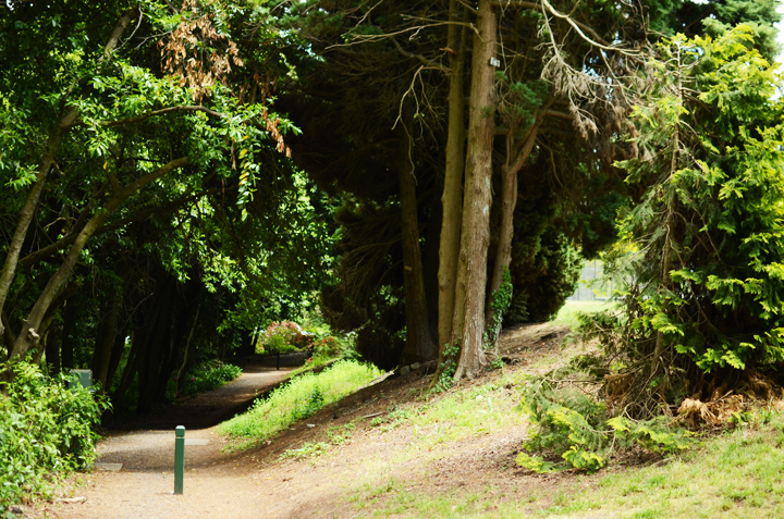 wombat hill
