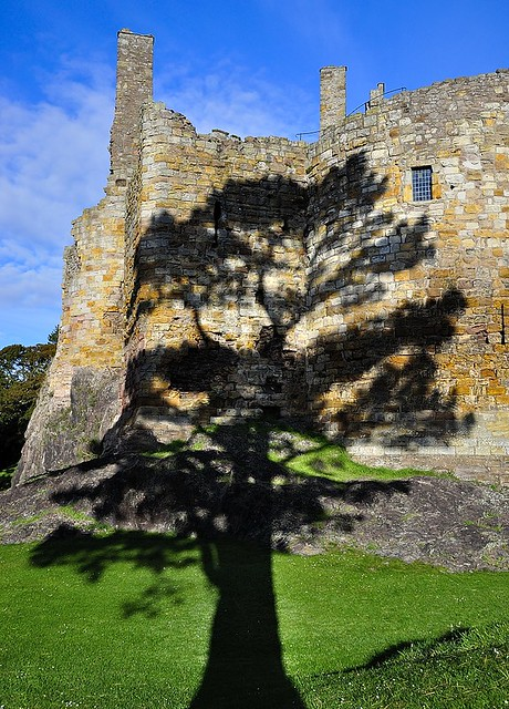 Cedar tree shadow