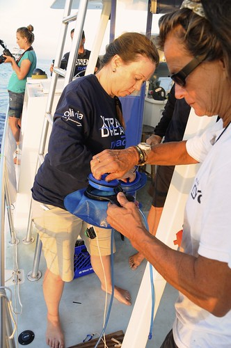 <p>University of Hawaii at Manoa Assistant Research Professor Angel Yanagihara during Diana Nyad's August 2012 attempt to swim from Cuba to Florida. Photo credit: Christi Barli</p>