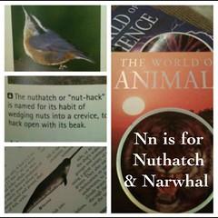 Our animal studies @masterbooks4u #homeschool Weekly wrap up @ihomeschoolnet