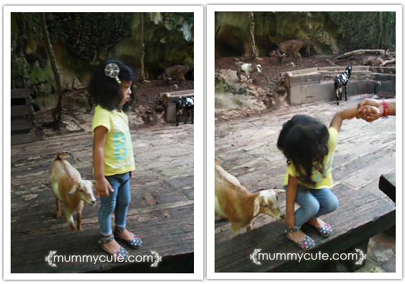 8285621121 1413dd963c z Bercuti di lost world of tambun 2 | Rainforest Trail