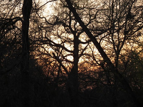 sunsettrees seenonmydailywalk rattancreekgreenbeltpark