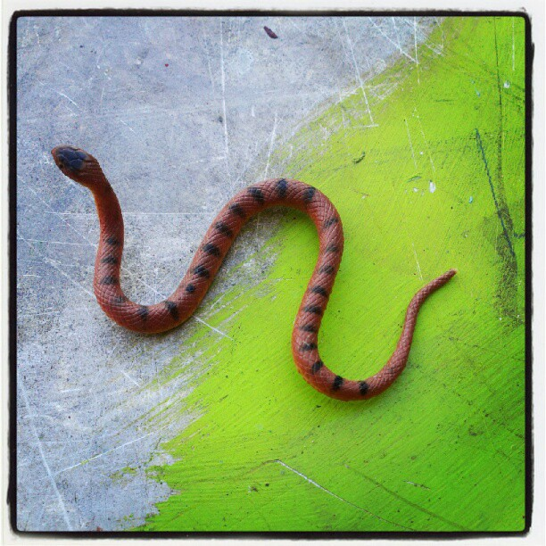 OMG we had a brown SNAKE in the front garden and in the HOUSE!