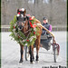 Jingle bells, jingle bells, jingle all the way... Oh what fun it is to ride in a one-horse open... jog cart! by Rock and Racehorses