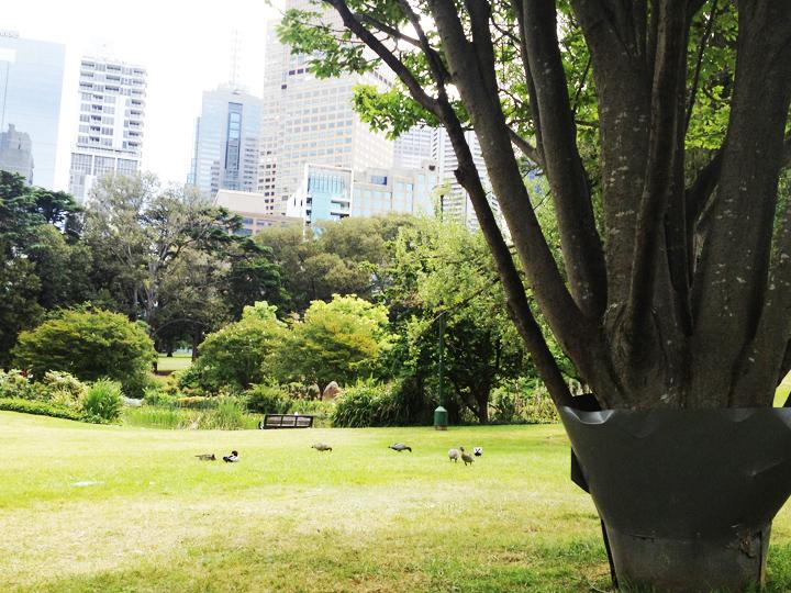 city park g