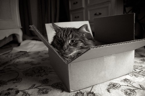 Cat in a Box 1