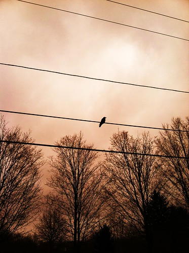 trees winter sky birds mood wires leonardcohen