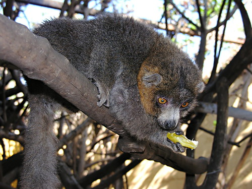 Monkey Park Los Cristianos