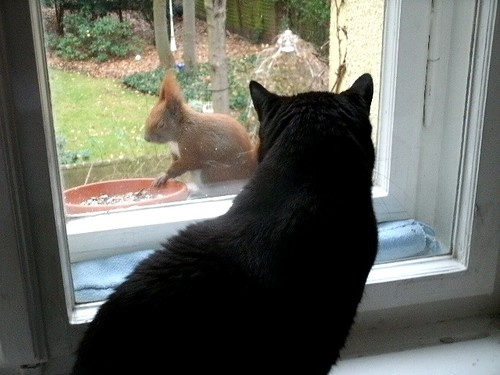 Katze und Eichhörnchen 3