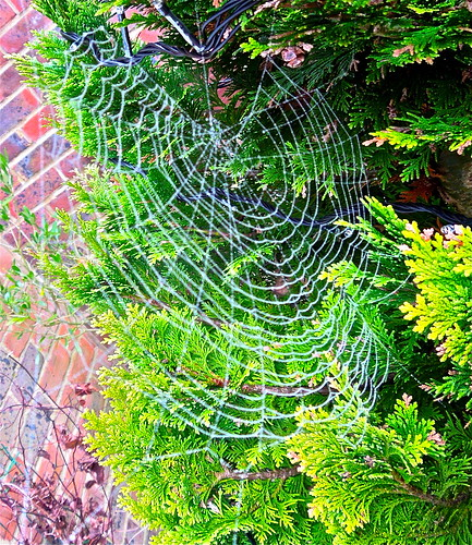 Web Design .....(6/365) by Irene.B.