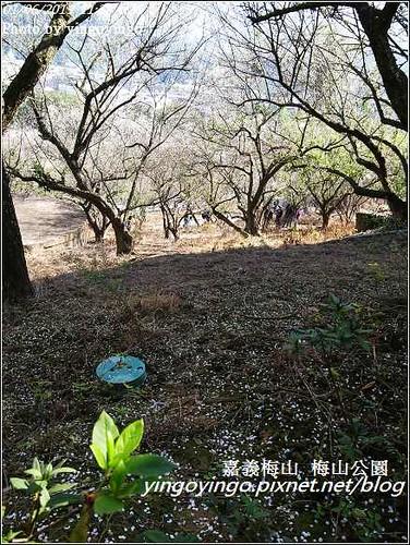 嘉義梅山_梅山公園20130106_R0071449