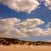 Beach dunes under cloudy sky