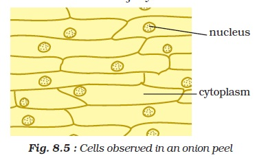 labeled diagram of an onion cell labeled diagram of beef cattle ncert class viii science chapter 8 cell structure and ... #10