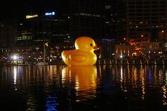 Huge Duck floating at Darling Harbour in Sydney
