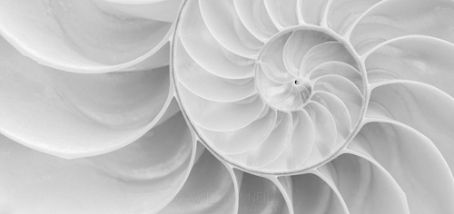 Nautilus Shell Detail, California  2012