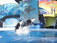 Orca show x