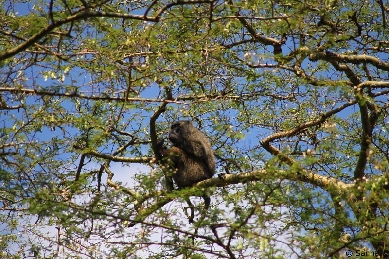 paboon1
