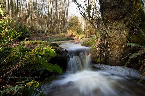 creekfallsfernsaldertrees wintersaltspringisland