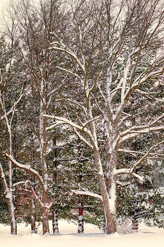 feb snow-