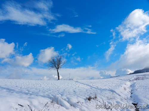 winter friends snow tree nuvole bluesky neve 1001nights albero rebranca allegrisinasceosidiventa 1001nightsmagiccity photographyforrecreation