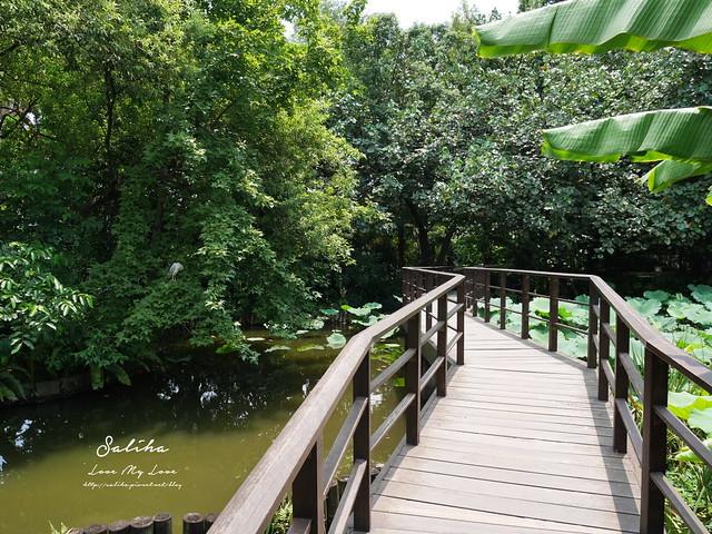 台北一日遊景點推薦植物園荷花蓮花池 (19)