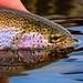 William Teuscher - Sand Creek Pond, Idaho - Rainbow Trout Catch and Release.