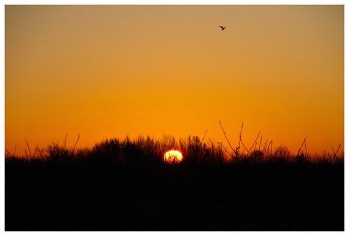 uk morning england sunrise cambridgeshire needingworth