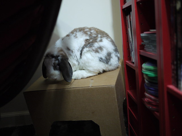 betsy on top of her box
