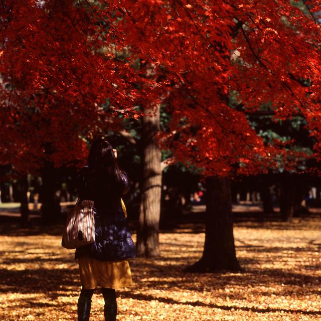 赤と黄の季節