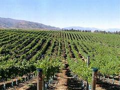 Camino incierto para la vitivinicultura argentina