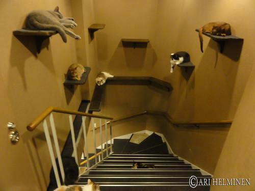 Cat cafe, Tokyo Japan
