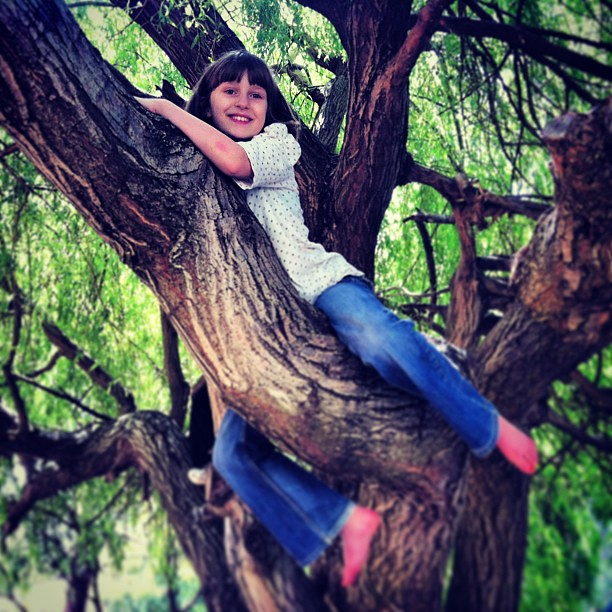 I've never climbed this high before! #climb #tree #climber
