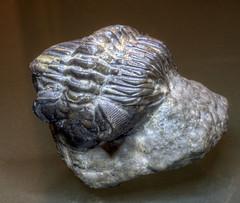 Fossils, Minerals, Shells and Bones
