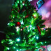 Our Tree by MacDonald_Photo
