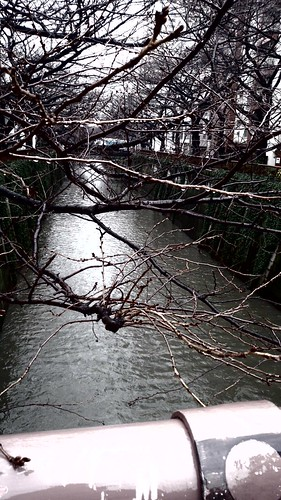 雨の日の目黒川