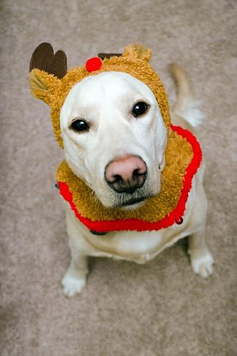 Merry Woof Woof!