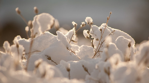 2012.12.18 Snow (7)