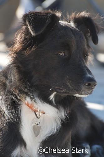 Dog  ©ChelseaStark http://www.chelseastarkphotography.com by chelseastarkphotography.com