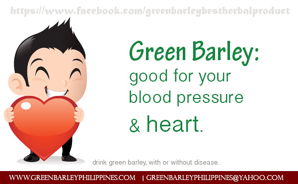 green barley for hypertension