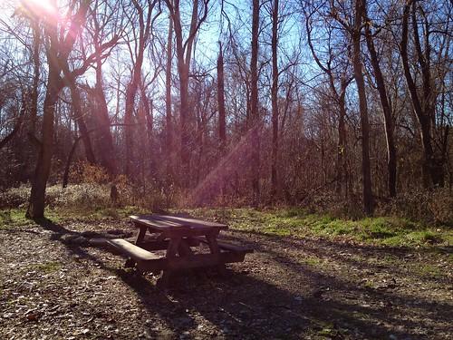 trees usa holiday america bench missouri americadecember2012