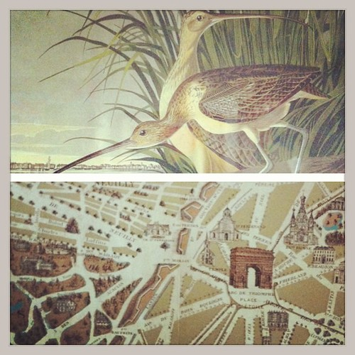 Just for comparison: the painted Parisian map and one of Jackson's 8 Audubon prints. Thoughts? #InstapicFrames