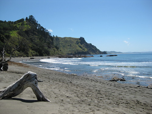 newzealand holiday beach outdoor auckland leigh goatisland