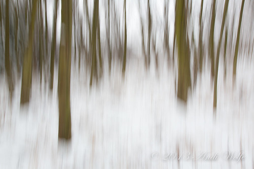 ICM: Winter trees by andiwolfe