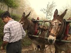 Les mulets
