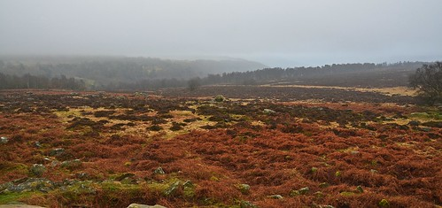 Longshaw Estate 13 by birbee