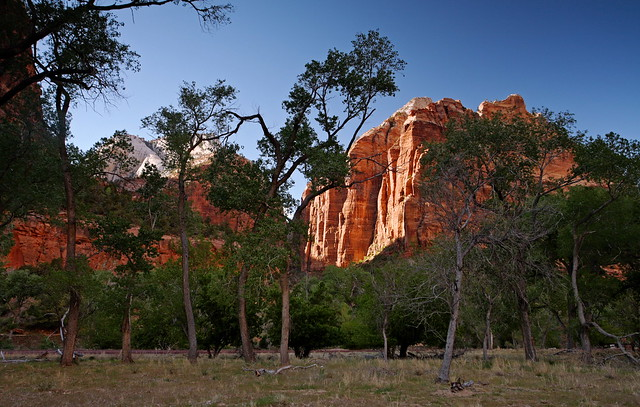 Zion: Cottonwoods and West Rim
