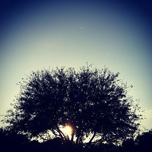 #tree #silhouette #dusk